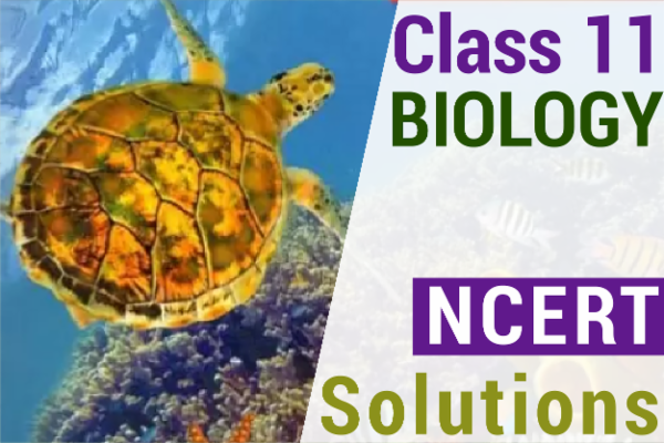 NCERT SOLUTIONS FOR CLASS 11 BIOLOGY cover