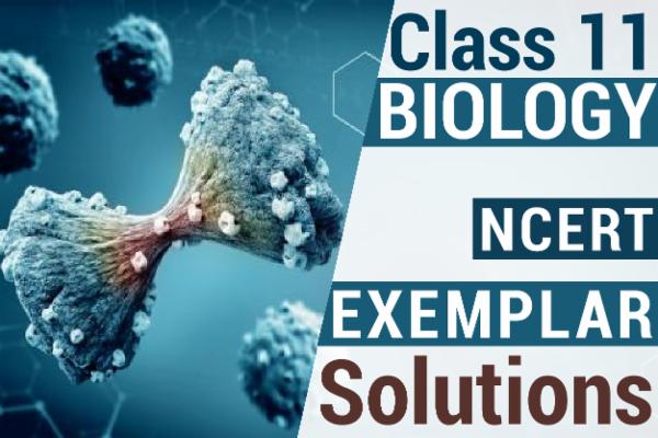 NCERT BIOLOGY EXEMPLAR SOLUTIONS CLASS 11 cover