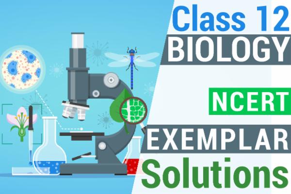 NCERT BIOLOGY EXEMPLAR SOLUTIONS CLASS 12 cover