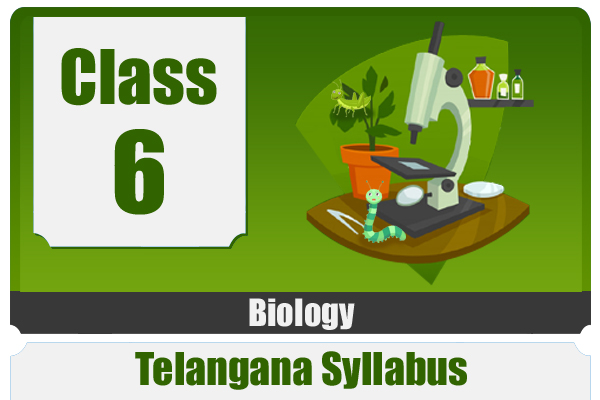 CLASS 6 BIOLOGY - TS cover