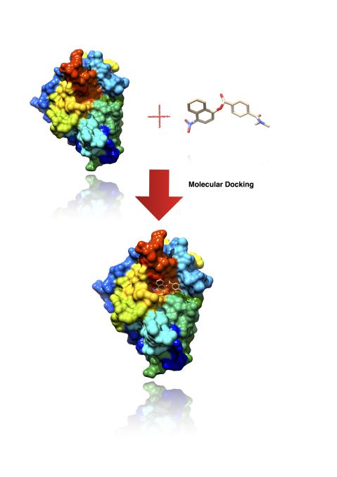 Advanced Molecular Docking- Free Webinar: 6th Sept: 2 PM-4 PM cover