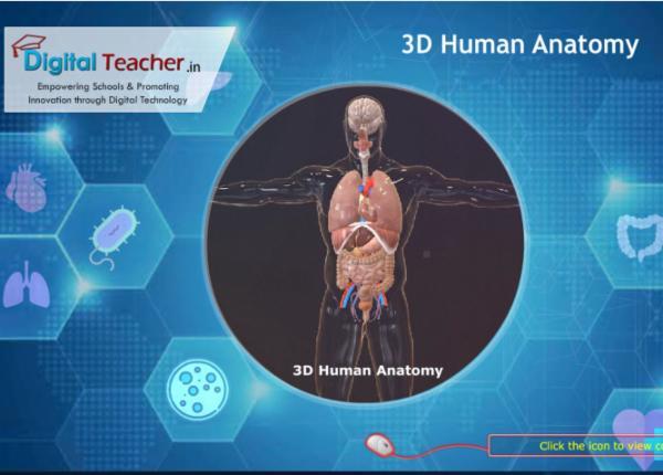 Human Anatomy cover