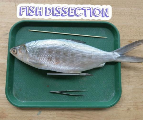 Virtual dissections of fish: Self learning certification cover