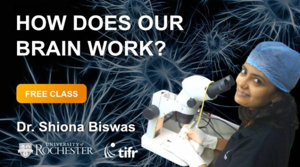 How does our Brain work? cover