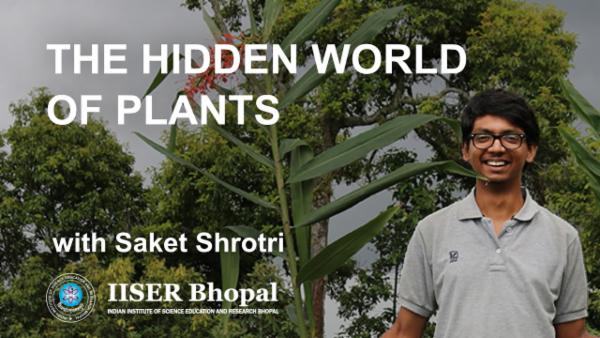 The Hidden World of Plants cover